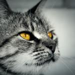 Halloween-Katzen: Warum es manchmal auch Cat Content sein darf