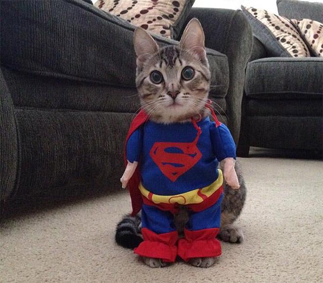 Halloween-Katzen bringen uns ins immer wieder zum Lachen